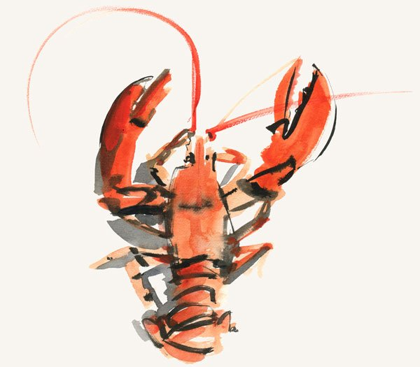 Lobster illustration Hope Cove House